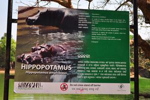 Плакат о бегемоте