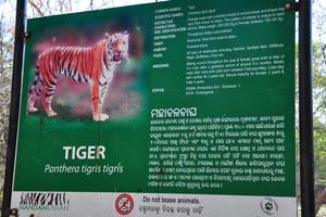 Плакат о тигре
