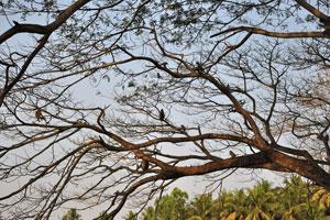На дереве сидит много обезьян