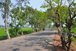 Дорога между рисовыми полями
