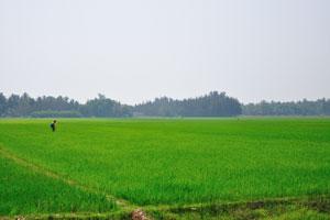Химическая обработка рисовых полей
