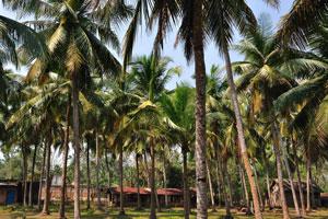 Маленькая деревня построена в тени кокосовых пальм