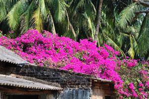 Океан малиновых цветов на крыше