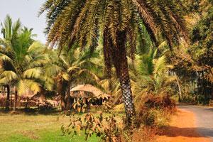 Странная пальма