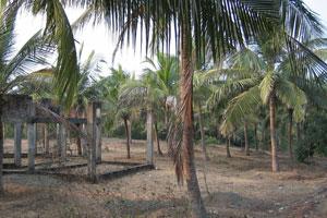 Незавершенное строительство среди кокосовых пальм