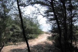 Выход из леса к океану