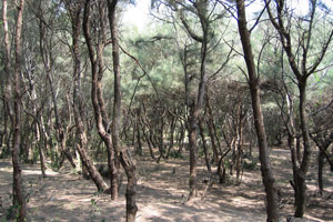 Опавшая хвоя создаёт в лесу мягкий ковер