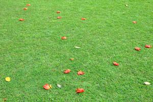 Красные цветы лежат на ярко-зелёной траве
