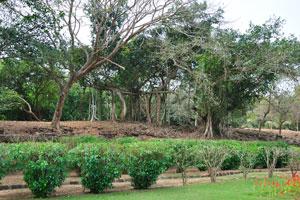 Деревья в конце храмового участка