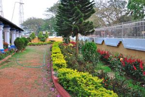 Обилие цветов и экзотических растений