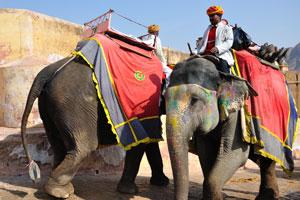 Слон полный туристов идёт вверх в форт. Пустой слон спускается обратно