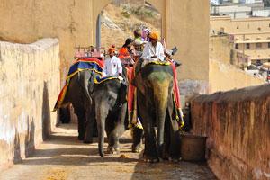 Катание на слонах в форте Амбер