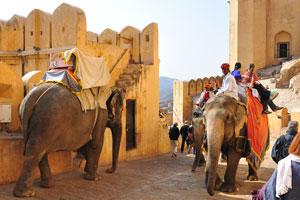 Прогулка на слонах наполнена бурными эмоциями