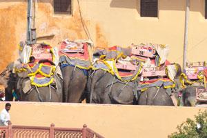 Стойло слонов работающих в форте Амбер