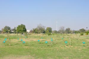 Некоторые растения в парке подписаны