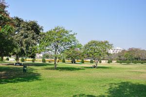 Зелёные лужайки Центрального парка