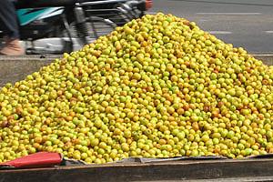 Спелые плоды джуджуби