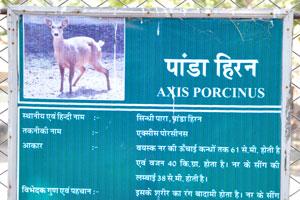 Плакат о свином олене