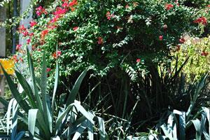 Агавы и красные цветы