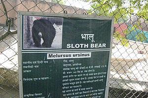 Плакат о медведе Губач
