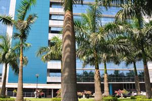 Огромные королевские пальмы в технопарке Олимпия