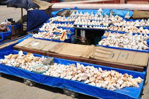 Магазин морских раковин