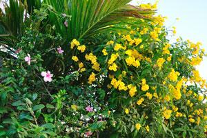 Обилие жёлтых цветов