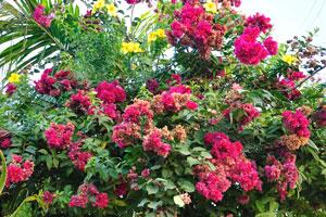 Каньякумари это город цветов