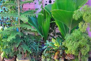 Большое разнообразие комнатных растений в горшках
