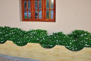 Крошечные белые цветы хорошо вписываются в дизайн дома