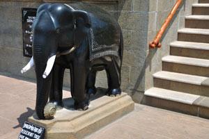 Небольшой чёрный слон