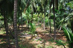 Обыкновенный лес в южной оконечности Индии