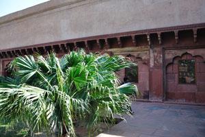 Пальма в саду Диван-и-Ам