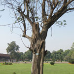 Дерево номер 205