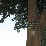 Путранджива роксбургии 178