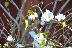 Белые цветы внешнего двора