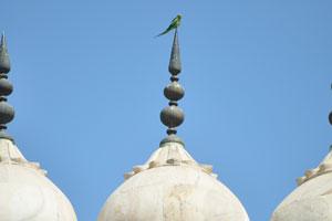 Попугай находится на вершине купола