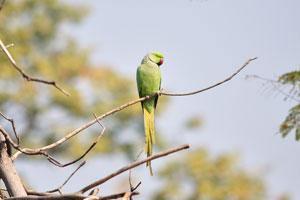Зелёный попугай с красным клювом